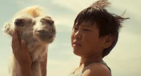 celestial camel1